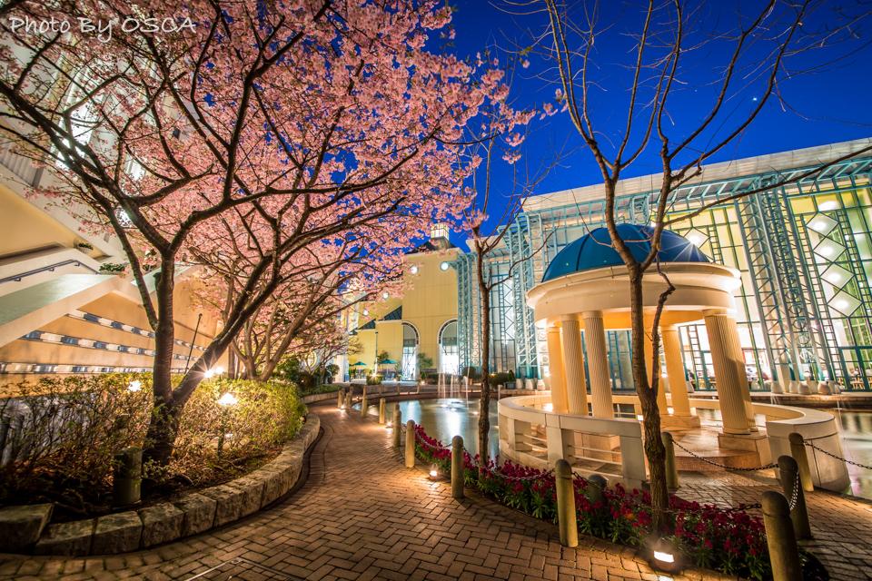 イクスピアリ・ガーデンの夜桜を鑑賞する - 夜景散歩
